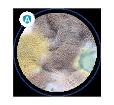 alergeny grzybów pleśniowych